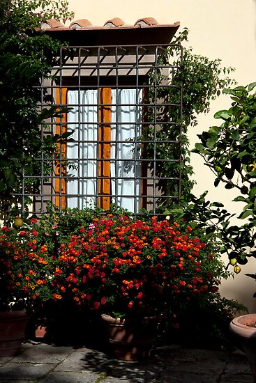 Window Blossoms by phil decocco