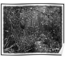 web of morning dew Poster