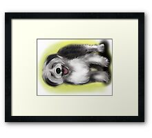 Alex Old English Sheep Dog Framed Print