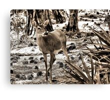 The Doe Canvas Print