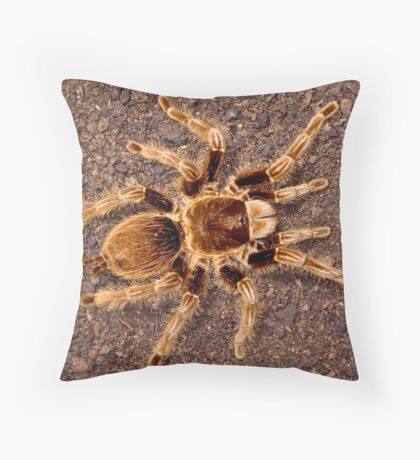 Curly Hair Tarantula Throw Pillow