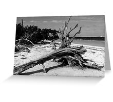 A Day On Sanibel Island ~ Part Two Greeting Card