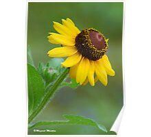 YELLOW SIMPLICITY -  EENVOUD IN GEEL Poster