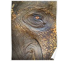 Close-up Elephant eye Poster