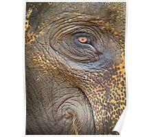 Close-up Elephant eye Poster