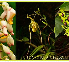 The World of Exotic Flowers by ddarbela