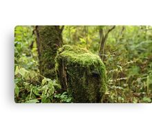 Moss covered Canvas Print