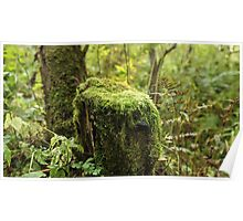 Moss covered Poster
