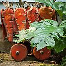 Carrots on Wheels by Marian Grayson