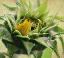 Bud in Bloom by vigor