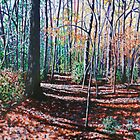 'A WALK IN THE WOODS'  by Jerry Kirk