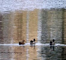 3 Ducks and a Lake by Lindy Long