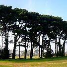 A Fine Line of Pine by mikebov