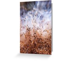 Bull rush seeds Greeting Card
