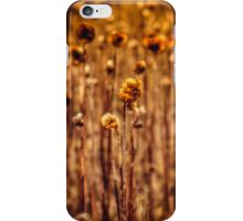 Sunflower Heads in the Winter Sun iPhone Case/Skin