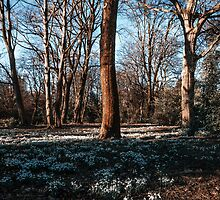 Snowdrops In a New Spring by Brian  Dwyer