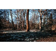 Snowdrops In a New Spring Photographic Print