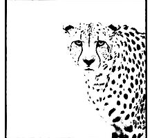 Cheetah by Wendi Donaldson