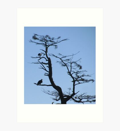 Bald eagles Oregon coast Art Print