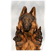 Long Coated German Shepherd Collage Poster