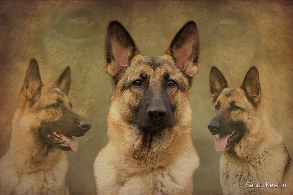 Sable German Shepherd Dog Collage by Sandy Keeton