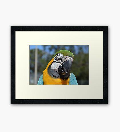 Paco closeup 2 Framed Print