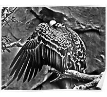 Monochromatic Vulture Poster