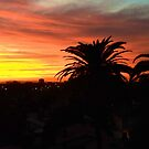California Sunset by carls121