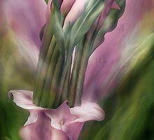 Pink Callas In Calla Vase by Carol  Cavalaris