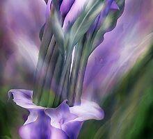 Purple Calla Lilies In Calla Vase by Carol  Cavalaris