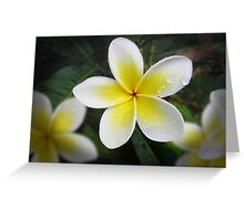 The Frangipani Greeting Card