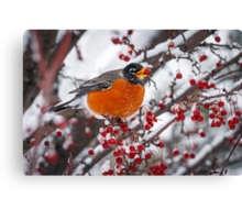 Robin with Crab Apple in the Snow Canvas Print