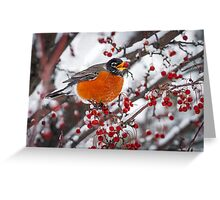 Robin with Crab Apple in the Snow Greeting Card
