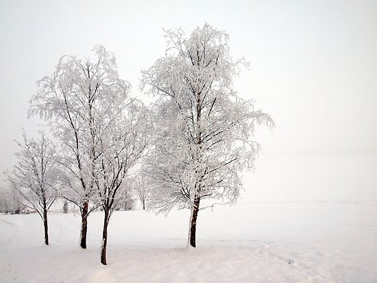 Winter Trees by Ludwig Wagner