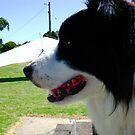 Fraser-The Dog by 1234LiamFaris12