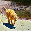 Ginger by 1234LiamFaris12
