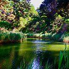Lake Sunshine by 1234LiamFaris12