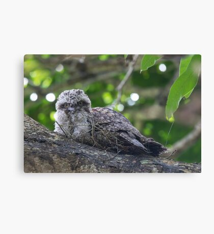 Guess Who Went Out On A Branch Canvas Print