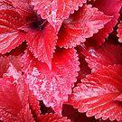 Simply Red by Wayne Gerard Trotman