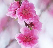 Pink Flowers by derekTheLair