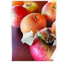 179/365 fruitful Poster