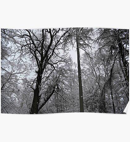 White Trees Christmas Poster