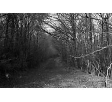 Path with Trees Photographic Print