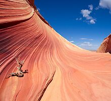 The Wave by Mike Herdering