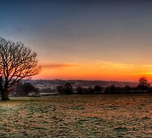 Mighty Oak at Dawn by gardencottage