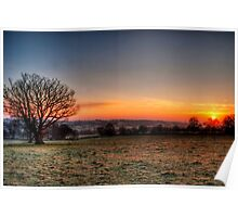 Mighty Oak at Dawn Poster