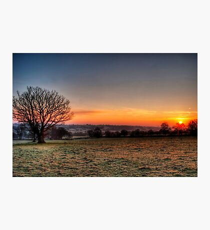 Mighty Oak at Dawn Photographic Print