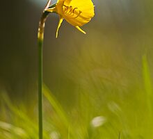 Yellow beauty by César Torres