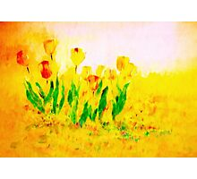Tulips in Springtime'... Photographic Print
