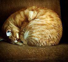 Fibonacci's Cat by Patito49